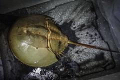 <strong>Фото: пресс-служба Приморского океанариума</strong>