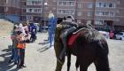 <strong>Колоритным участником субботника стал казак, который катал детей на своем коне</strong>