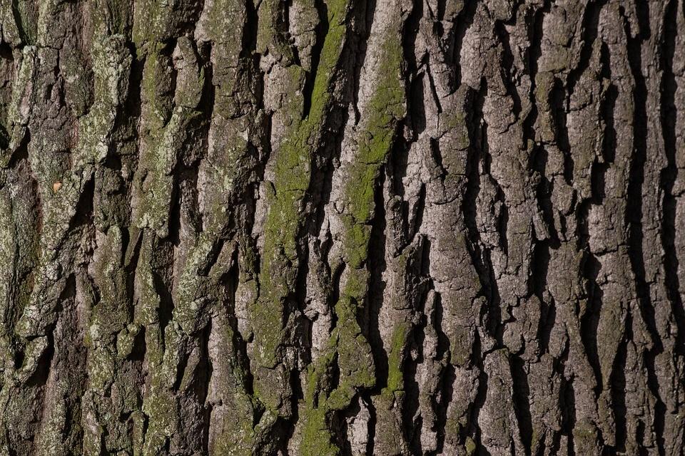 В Приморье незаконно нарубили леса на 31 млн рублей
