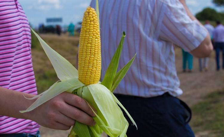 В Приморье отметили «День поля»