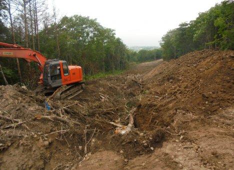 Десятки гектаров уникального леса варварски вырубили в пригороде Владивостока