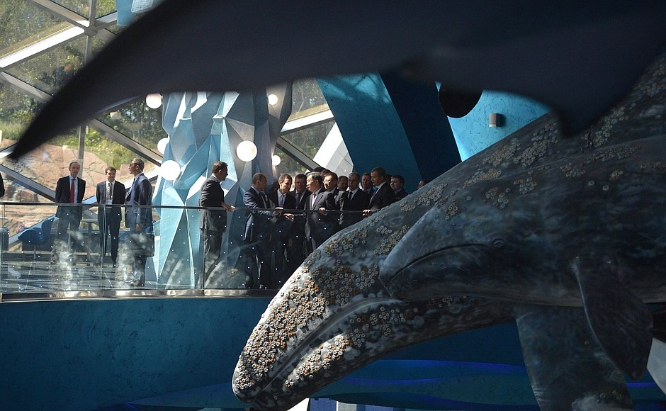 Тропических рыб с особой осторожностью перевезут в главный корпус Приморского океанариума