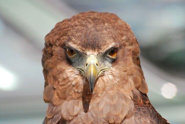 Приморец смастерил огромного железного орла