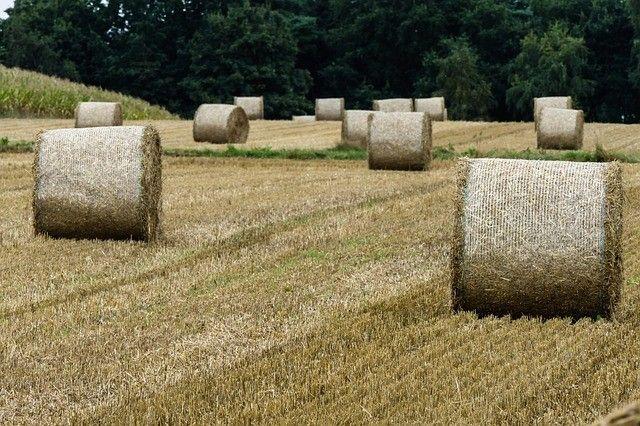Губернатор предложил экспортировать из Приморья сено