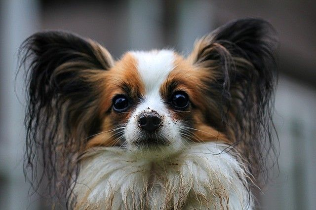 «Она агрессивна»: в Приморье отлавливают бродячих собак — власти