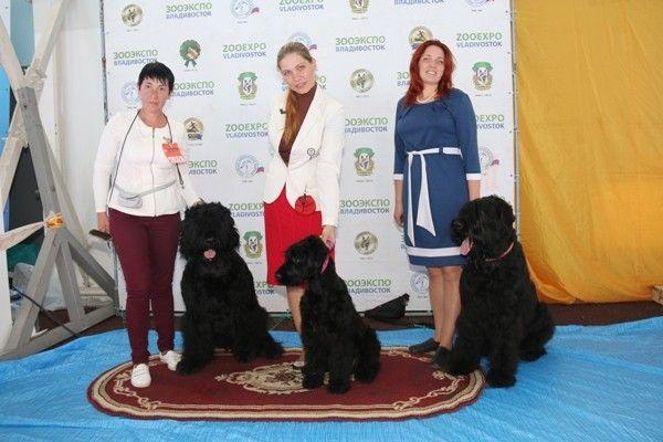 Приморские тюремщики приняли участие в международной выставке собак