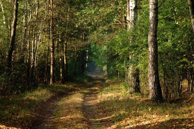 В Приморье открыто первое школьное лесничество