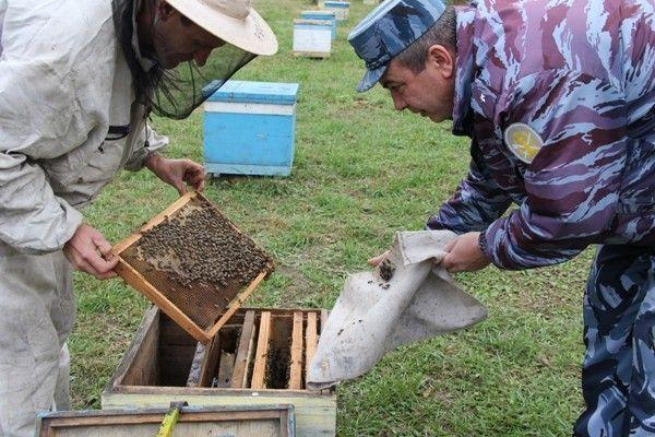 В приморской колонии собрали урожай мёда