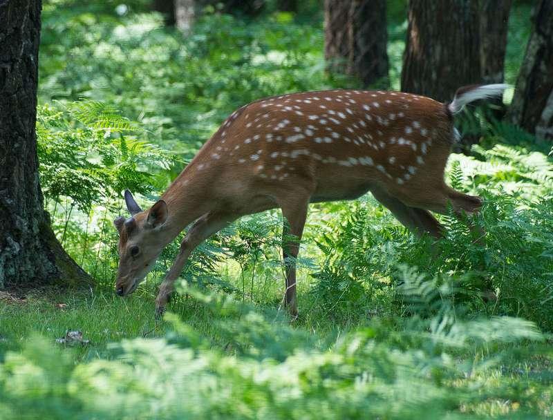 О ловле браконьеров в Приморском крае
