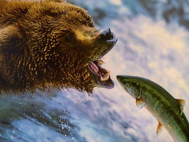 Почти 125 тысяч тонн красной рыбы доставили во Владивосток с начала года