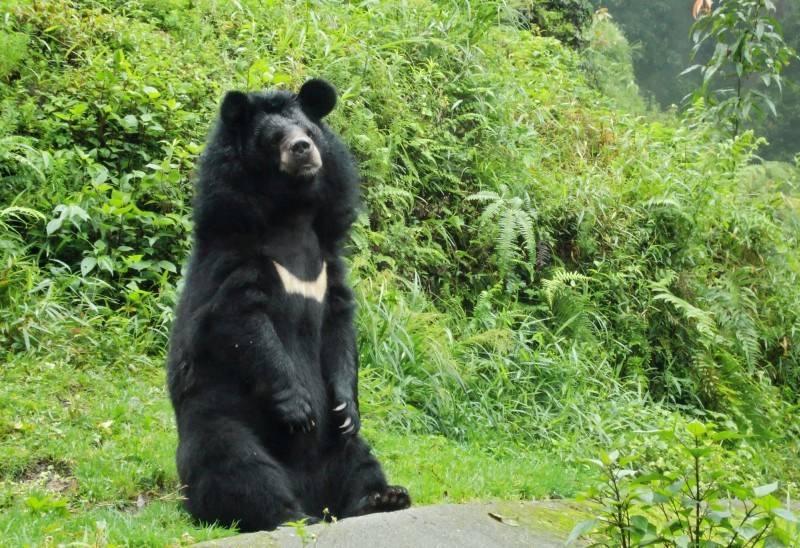 В Приморском сафари-парке открылся парк гималайских медведей