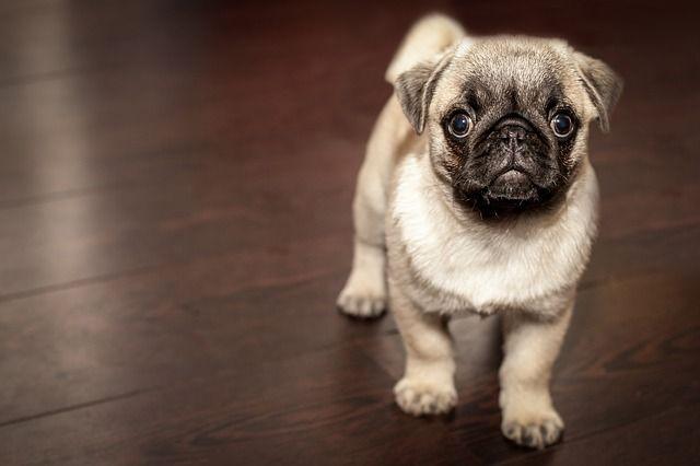 Житель Владивостока украл из приюта собаку и съел её