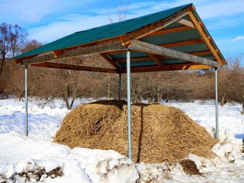 Голода не будет: звериные закусочные на «Земле леопарда» помогут копытным пережить зиму