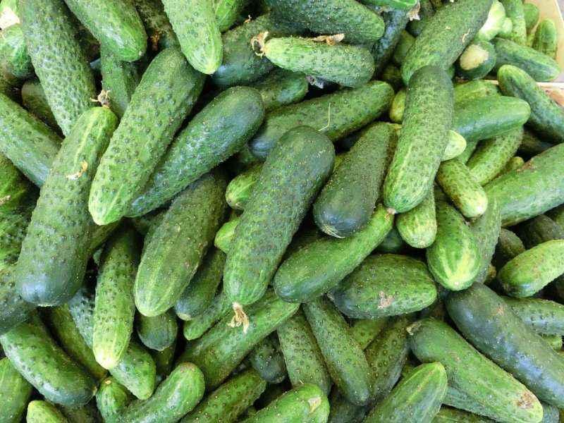 Приморцев предупредили: суражевские овощи могут навсегда исчезнуть с прилавков