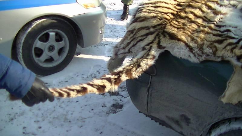 Сотрудники ФСБ и полиции задержали приморца, который хотел продать шкуру амурского тигра