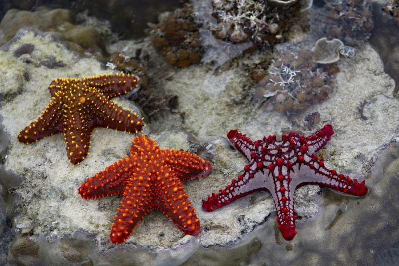В Приморье будут выпускать косметику из морских звёзд