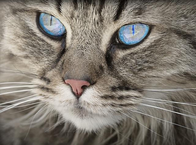 Лейкоз и паразиты: во Владивостоке большое число кошек держали в запертой квартире