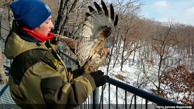 Хищных птиц выпустили на свободу в Приморском сафари-парке