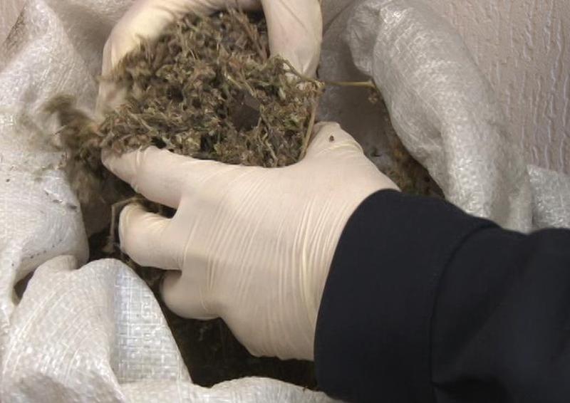 В Приморье полицейские изъяли у мужчины больше килограмма марихуаны