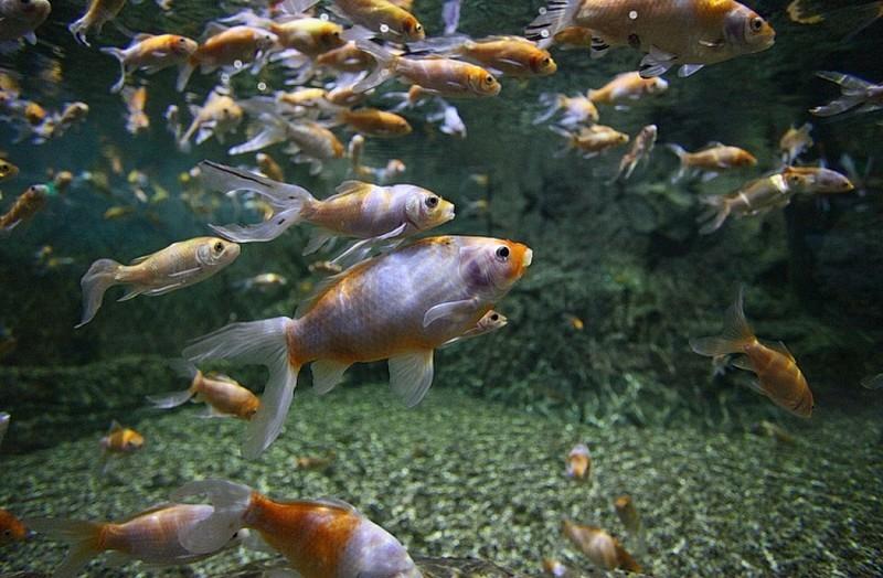Приморский океанариум в новогодние праздники посетило почти 14 тыс. человек