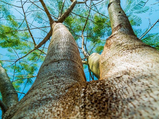 Во Владивостоке в 2016 году уничтожили более 2600 деревьев и 30 тысяч кв. м почвы