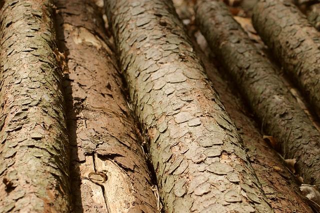 Во Владивостоке десятки деревьев вырубят ради строительства одного здания