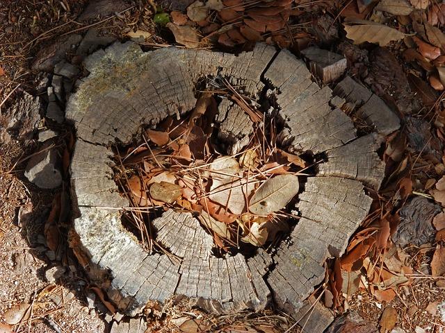 Во Владивостоке незаконно вырубили 60 деревьев