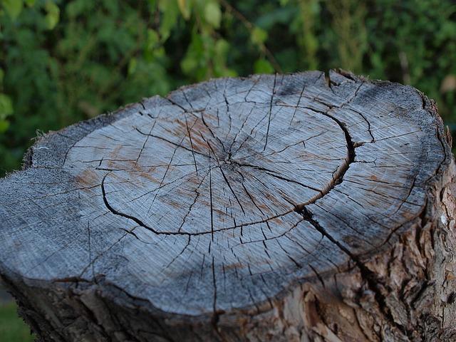 Владивосток с помощью «санитарной вырубки» лишат ещё 310 деревьев