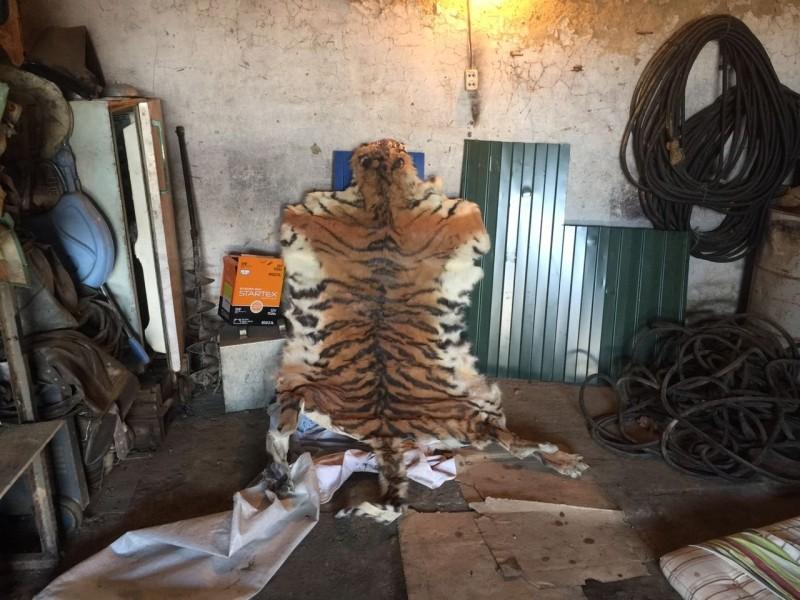 В Приморье задержали двух мужчин, пытавшихся продать шкуру амурского тигра за четыре млн рублей