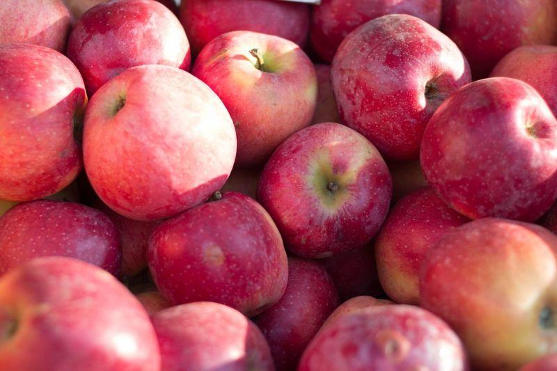 В Приморье более девяти тонн польских яблок вывезли на полигон и уничтожили