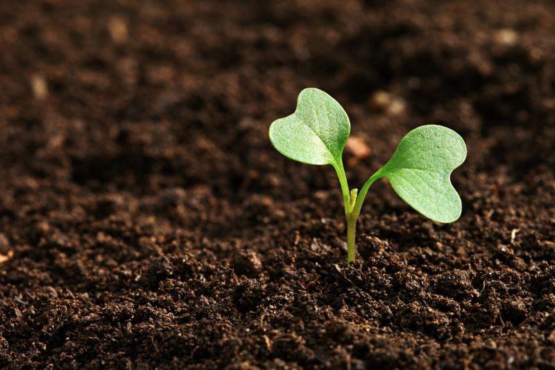 «Земельный» вопрос является одним из самых актуальных для бизнесменов Приморья — «Деловая Россия»