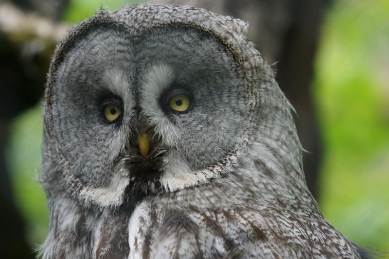 Зоопарк «Садгород»: совы, канюки, летучие мыши и редкая ястребиная сова ждут весны, чтобы вернуться в природу