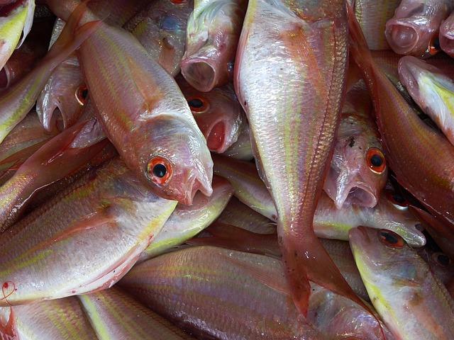 Рыболовное судно «Мария» доставило во Владивосток 275 тонн рыбы
