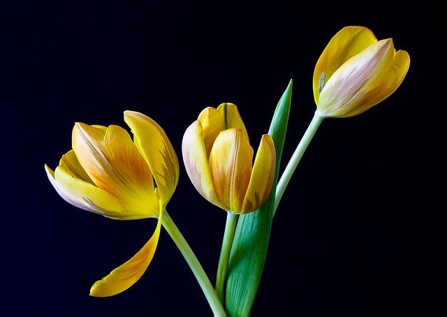 Готовимся к 8 Марта: во Владивостоке предусмотрели сотню мест для продавцов цветов