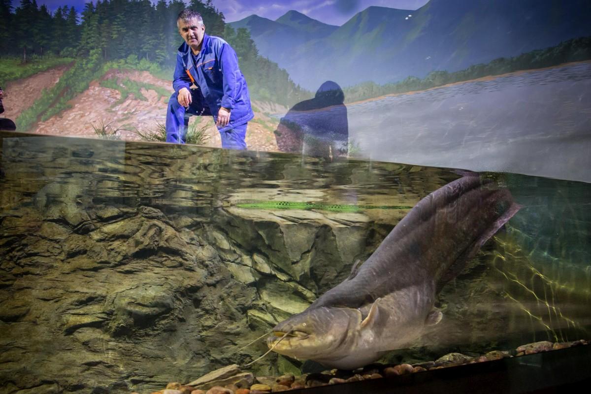В Приморском океанариуме дерзкий сом Солдатова научился брать рыбу из рук