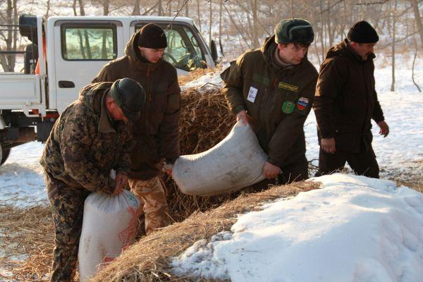 Сыты копытные, прокормится и тигр: в Приморье завершена подкормка копытных животных