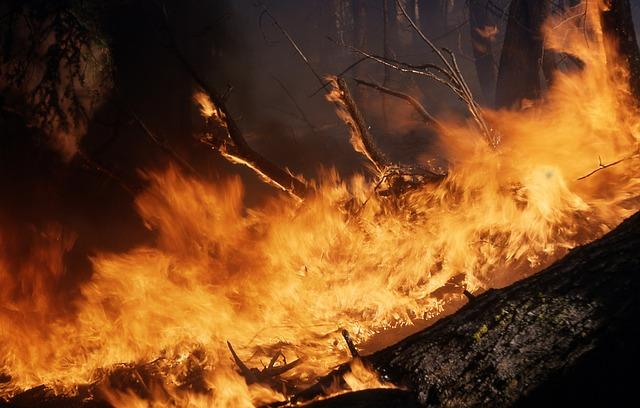 Приморцев шокировали фотографии столбов дыма от горящего леса