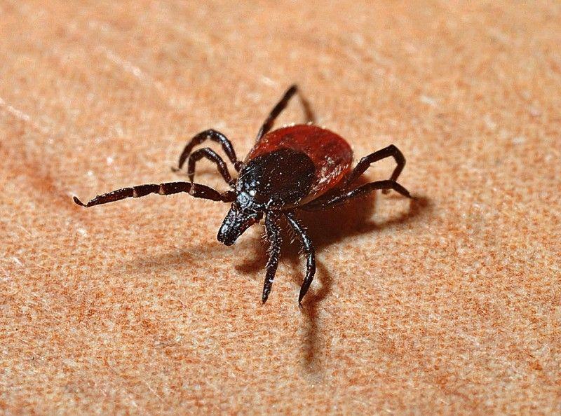 Роспотребнадзор призвал приморцев прививаться от клещевого энцефалита в октябре-ноябре