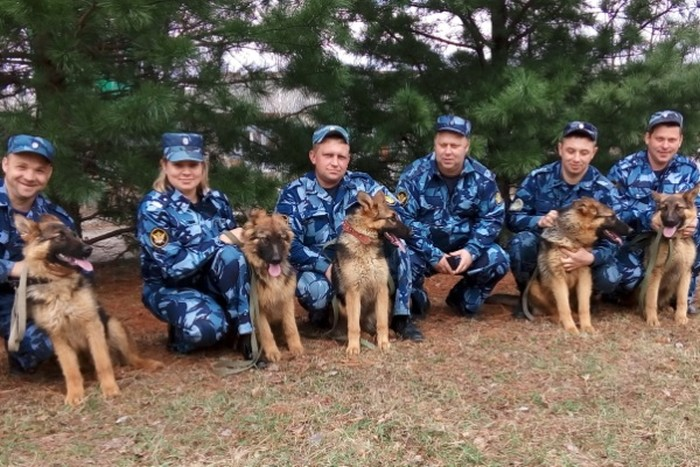 Пять щенков немецкой овчарки отправились служить в приморские колонии
