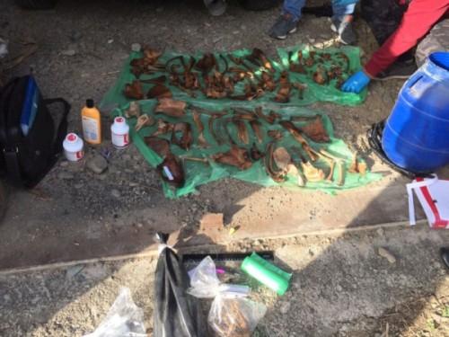 В Приморье у гражданина КНР изъяли более 120 костей тигра