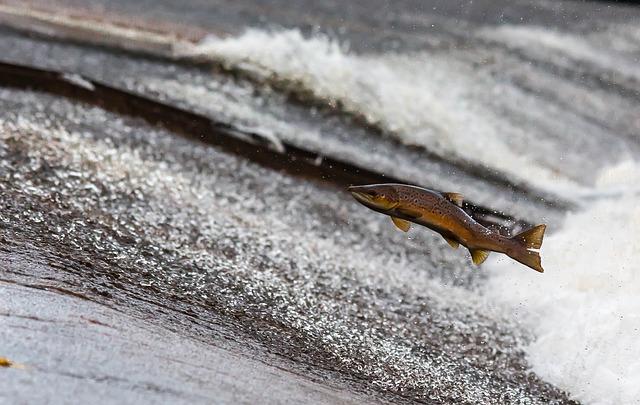 В Уссурийске подтопленцы ловили грязную рыбу голыми руками