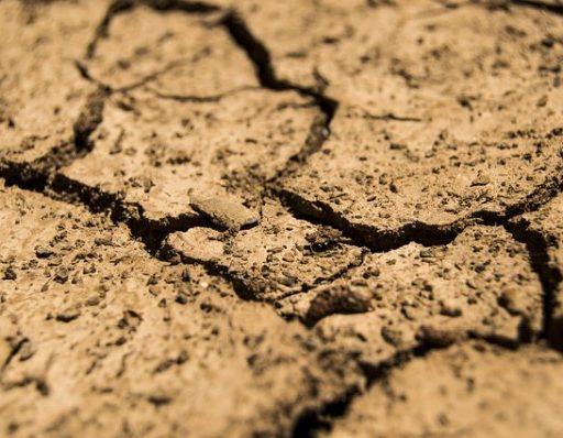 В Приморье установят максимальные цены на кадастровые работы для «дальневосточных гектаров»