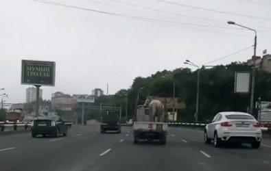 Во Владивостоке опасным способом перевозили лошадь