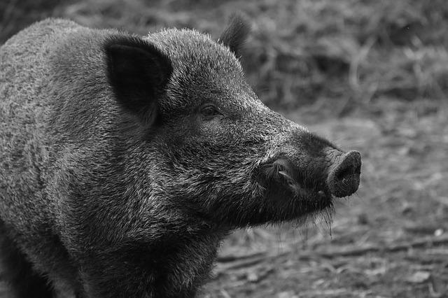В Приморье у браконьеров изъяли почти 100 единиц оружия и 26 туш животных