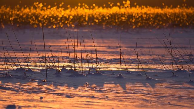 Сточные воды пробили путь до реликтового озера на Патрокле во Владивостоке