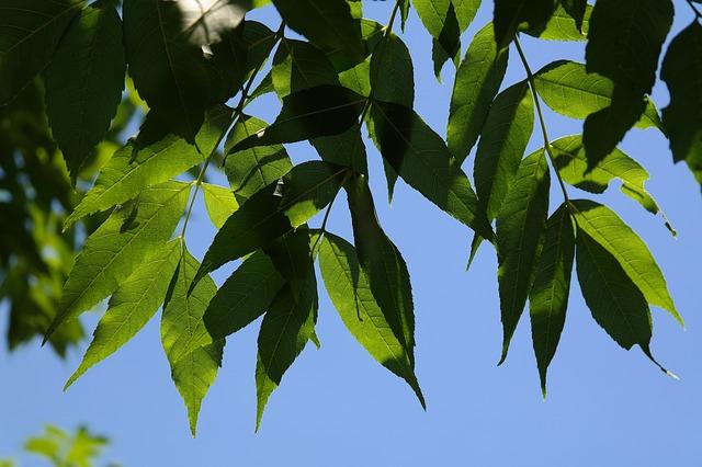 Деревья вернут на улицу Набережную во Владивостоке