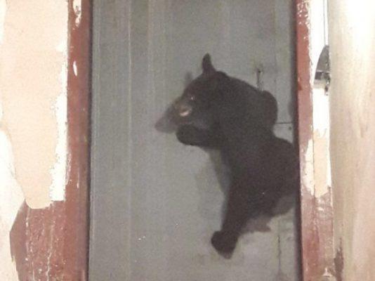 Приморец обнаружил в своём сарае медвежонка