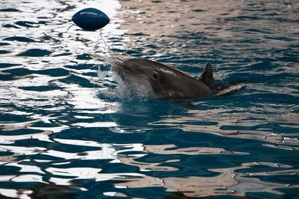 Приморский океанариум сообщил о гибели дельфина Ами