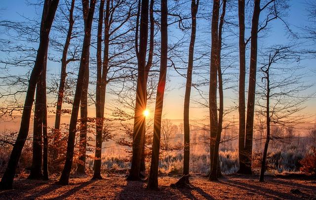 Во Владивостоке ради склада пожертвовали 280 деревьями и кустарниками