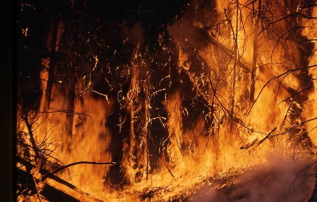 Специалисты дали прогноз по лесным пожарам в Приморье на сентябрь